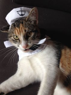 Arghhhh matey, ready for the high seas Seas, Biscuit, Friends, Animals, Amigos, Animales, Animaux, Animal, Crackers