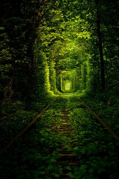 Ukraine Tunnel of Love
