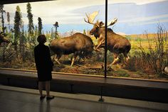 Natural History Museum Dioramas Are Disappearing Diorama art in museums has been on a slow decline since the 1920s, and today, museums (and museum goers) are more interested in interactive displays and multimedia than 100-year-old, meticulously recreated nature scenes.