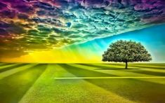 Árbol del arco iris Sky & Grass Field wallpapers and stock photos