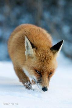 Evi Fox Nude Photos 22