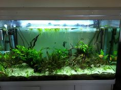 Matthew's All Pond Solutions tank!