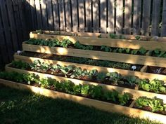 Lisa's step garden is one of our most popular pins of all time --> http://hg.tv/pz7q