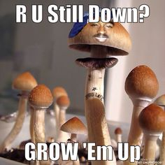 Tupac 2pac westside westcoast shakur mushroom psychedelic rap