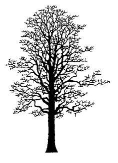 oak tree drawings tattoo - Google Search