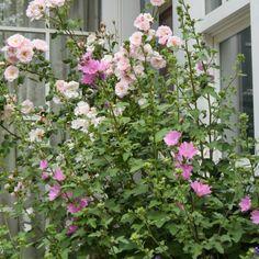 Prachtige landelijke tuin. Aangelegd door Hoveniersbedrijf Piet Wisse uit Aagtekerke, Zeeland.