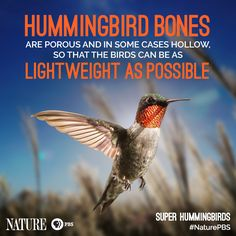 Astonishing Hummingbird Facts --