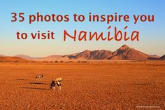 35 Photos to inspire you to visit Namibia and travel to Namibia while looking at oryx grazing in red dunes of Sossusvlei Africa Destinations, Top Travel Destinations, Amazing Destinations, Durban South Africa, Going On Holiday, Africa Travel, Travel Inspiration, Travel Ideas, Travel Tips