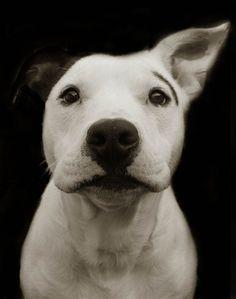 ritratti-foto-di-cani-randagi-abbandonati-traer-08
