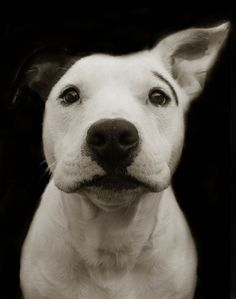 Touching Portraits Of Stray Dogs Waiting To Be Adopted   Bored Panda