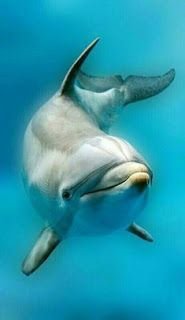BLOG OBRAZKI: DELFINY Animals Beautiful, Cute Animals, Wild Animals, The Ocean, Dolphin Art, Dolphin Drawing, Dolphin Painting, Dolphin Photos, Underwater Animals