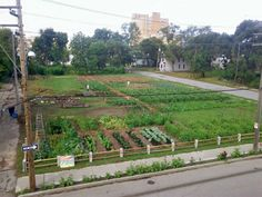 The official website for the Michigan Urban Farming Initiative. Urban Farming, Detroit, Michigan, Earth, Places, Lugares, Urban Homesteading, Mother Goddess, World