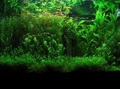 I want a planted aquarium. I don't really care about fish; just the beautiful moss, algae and plants.