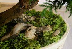 Artificial preserved bonsai - moss