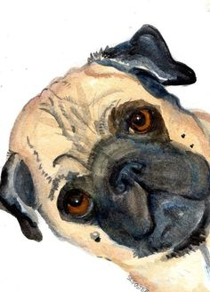 Original  watercolor painting Pug PUG ART by SharonFosterArt, $25.00