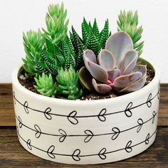 Cactus Arrangements - Love plants but not good at taking care of them? Lucky for you, cactus arrangements are back in style. Succulent Bowls, Succulent Arrangements, Succulent Terrarium, Cacti And Succulents, Planting Succulents, Planting Flowers, Cacti Garden, Succulent Ideas, Terrarium Ideas