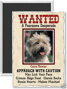 "Cairn Terrier ""Wanted"" poster"