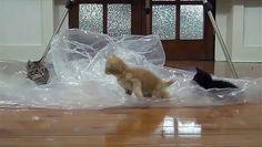 Best Kitten Playing Toys - Funny Viral Video http://ift.tt/1Y4Jr2h