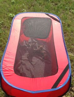Laundry Hamper Playpen - a great way to take your bearded dragon out for some sunshine and fresh air! PetDIYs.com