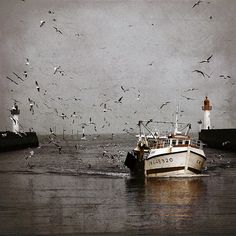 sea gulls around a shrimp boat