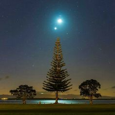 """Christmas"" image from New Zealand showing the full moon, planet Venus on the right, and the Panstars comet on the left, above an evergreen tree.  Shared on Facebook by Sabrina Mugnos."