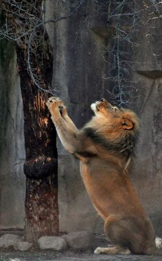 Scratching Post (by Eve'sNature)