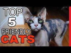 Top 5 Of The Friendliest Cat Breeds