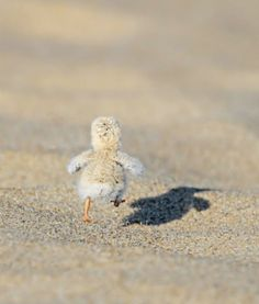 [It's National Bird Day today! They're giving away free cookies! I gotta GO!] (Pinterest.) Filed...