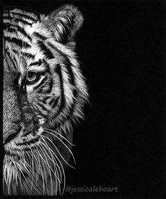 Half tiger face drawing Colored pencil on black paper White on black is one of my favorite looks # Half Face Drawing, Tiger Face Drawing, Tiger Face Tattoo, Drawing Faces, Black And White Art Drawing, Black Paper Drawing, White On Black Art, Animal Drawings, Pencil Drawings