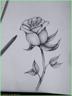 Art Sketches Ideas First attempt at a black and grey rose Best Art Pin is part of Pencil art drawings - First attempt at a black and grey rose First attempt at a black and grey rose Pencil Drawings Of Flowers, Flower Sketches, Cool Art Drawings, Pencil Art Drawings, Art Drawings Sketches, Rose Drawing Tattoo, Tattoo Drawings, Black And Grey Rose, Rose Sketch
