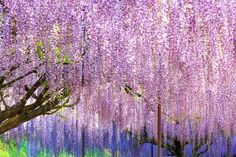 Spring Time, Japan, Plants, Plant, Japanese, Planets