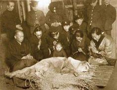 Deus quer que ajudemos aos Animais.  A última foto da Hachiko.  Aguiasemrumo Semrumo: Somente privilegiados encontram a graça do senhor nosso Deus recebendo seu coração na forma de um Cachorro!