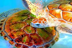 Green Sea Turtle (Chelonia mydas), Thailand | Stock Photo | Colourbox on Colourbox