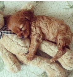 Pupy cute