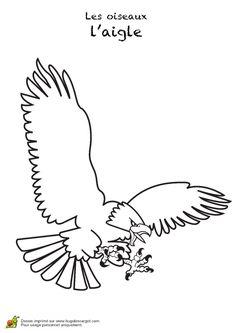 dessin d un aigle en pleine attaque colorier coloriages d 39 oiseaux pinterest animaux. Black Bedroom Furniture Sets. Home Design Ideas