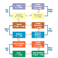 more than circadian rhythms [meridian's time chart w/ link to interactive informative charts of acupuncture points]
