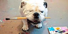 Austin, Texas-based Piper 'the one-eyed English bulldog' has sold more than 120 of her paintings. We featured some of her gallery-quality creations on msnNOW in October.