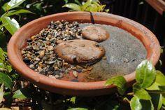 This plant pot saucer is a water source for bees and butterflies.  The flat stones are for butterflies to spread their wings and warm themselves while they drink.  The gravel and sand are a place for bees to land and drink – they need water, not just nectar.