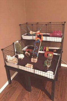 trendy ideas for pet store ideas guinea pigs - Pin Hairs Indoor Guinea Pig Cage, Guinea Pig House, Pet Guinea Pigs, Guinea Pig Care, Guinea Pig Hutch, Hamsters, Guinie Pig, Pig Habitat, Bunny Cages