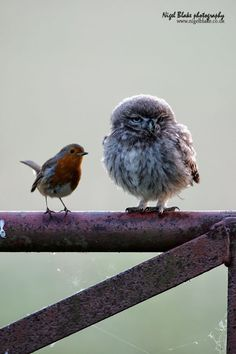 the smaller bird helps balance the larger one