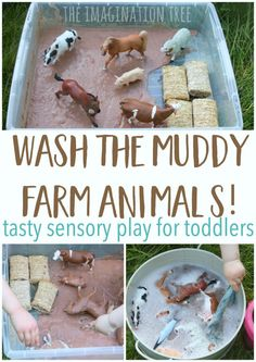 "Wash the muddy farm animals sensory play for babies, toddlers and preschoolers! This is taste-safe and so much fun for messy play times in the bathtub! Use chocolate pudding mix for the ""mud"", plain shredded wheat for the ""hay bales"" and a rosemary sprig for some greenery. Read 10 Dirty Pigs / 10 Clean Pigs"""
