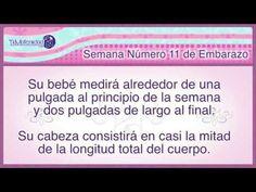 Embarazo Semana a Semana : Semana Numero 11 de Embarazo