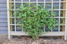 Amazon.com : Dura-Trel 11174M Winchester Trellis, Mocha : Trellis Climbing Plants : Patio, Lawn & Garden