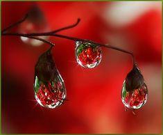 beautiful dew drops