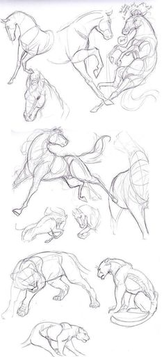 Anatomy Drawing Reference How to draw horses Horses. Horse Drawings, Animal Drawings, Art Drawings, Drawing Animals, Animal Sketches, Drawing Sketches, Sketch Art, Drawing Tips, Sketching