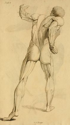 Elements of anatomy : d signed for the use of s...