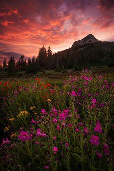 ladylandscape: (via 500px / Journey's End by Michael Bollino)
