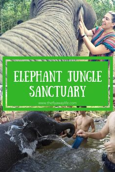 The Elephant Jungle Sanctuary is a must-do in Thailand! Getting to interact with…