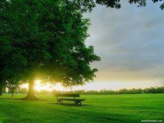 large tree photos | green-grass-and-big-tree-92456.jpg