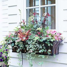 Create a Bold Mix for Shade Area window boxes